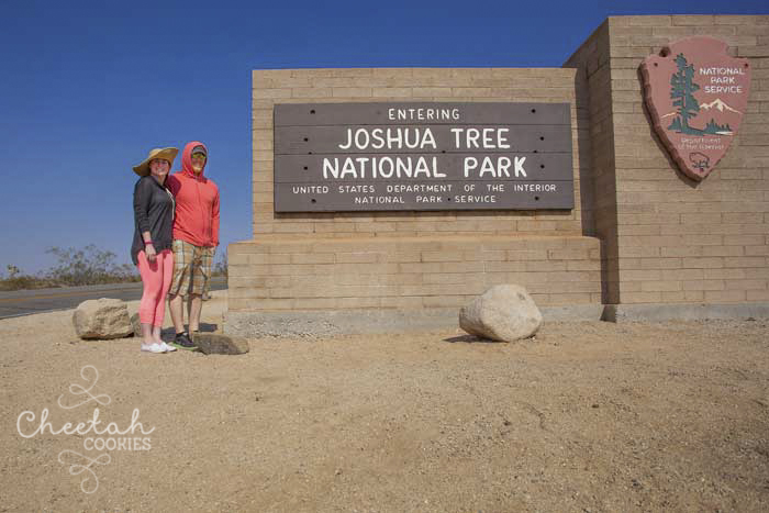 Joshua Tree- July 30th 2014