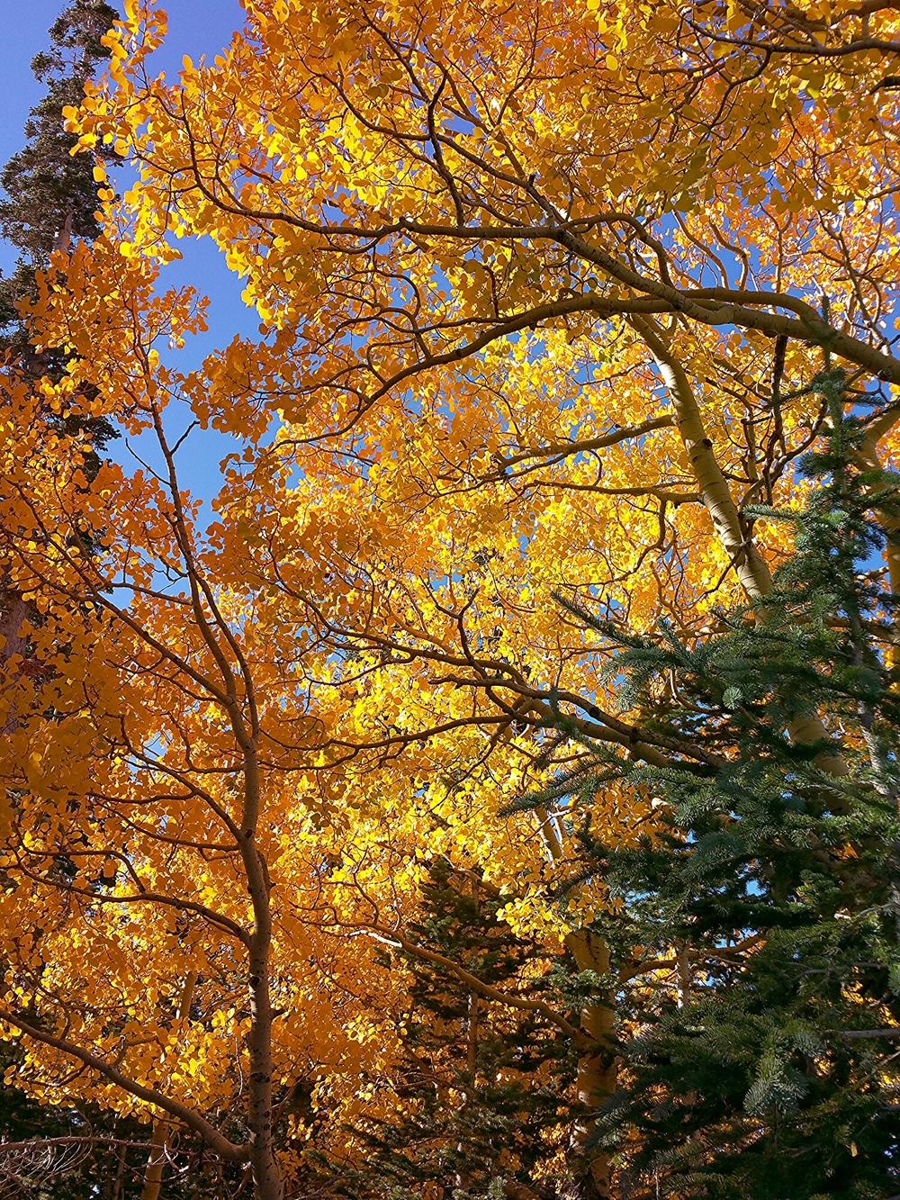 Fall colors in Cedar Breaks National Monument.
