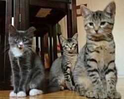Anabelle, Violet, Penelope