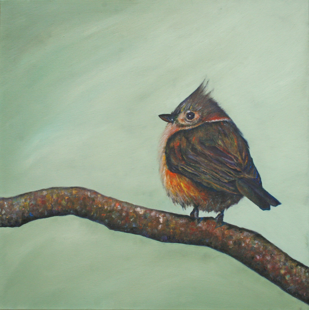 Here is the finished painting - Tufted Titmouse III, oil (Bemis collection)
