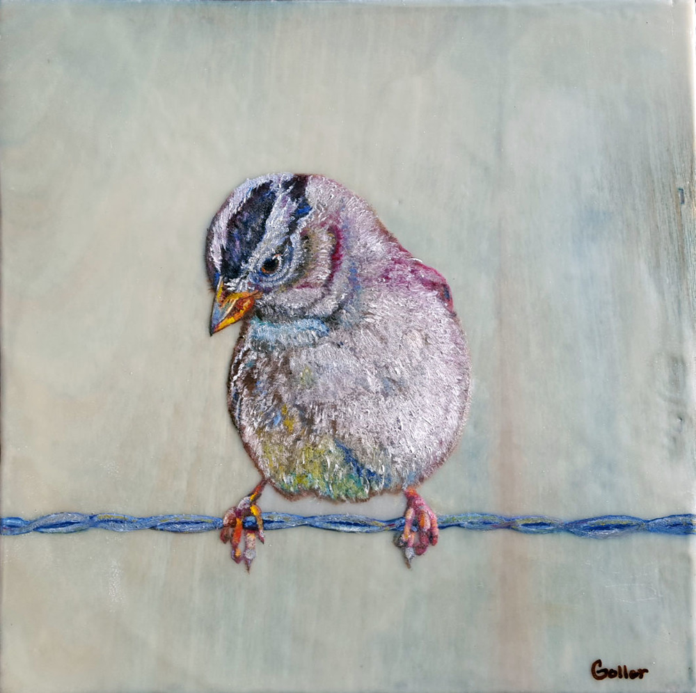 White Crowned Sparrow II, oil/encaustic (private collection)