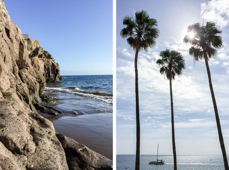 grancanaria-taurito-palmtrees.jpg