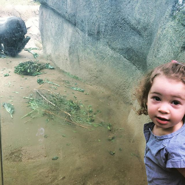 Una faces off with Gorilla