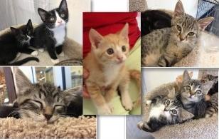 Kittens - Brenda