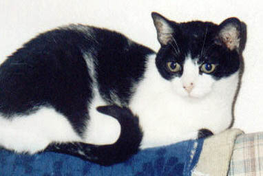 Ophelia    Ophelia  was rescued after being shot in a Bakersfield alley. Martha Gilleland and Linda Wright adopted her and loved their fierce, independent little alley cat until kidney disease took her life at age 16 (or so).