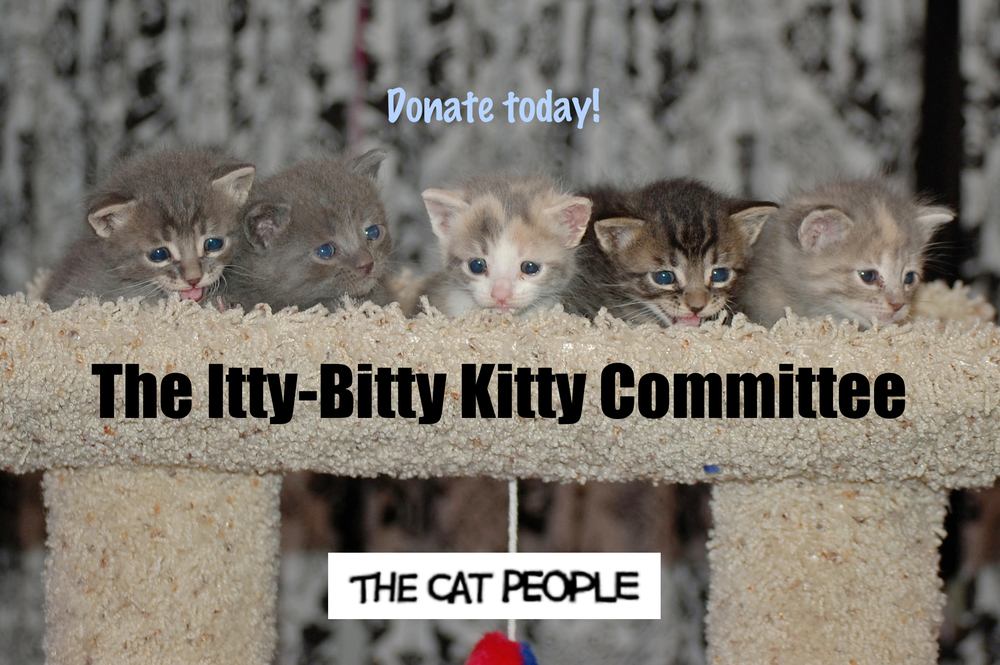 The Itty-Bitty Kitty Committee is comprised of all Cat People foster kittens. Photo shot by a Cat People volunteer.