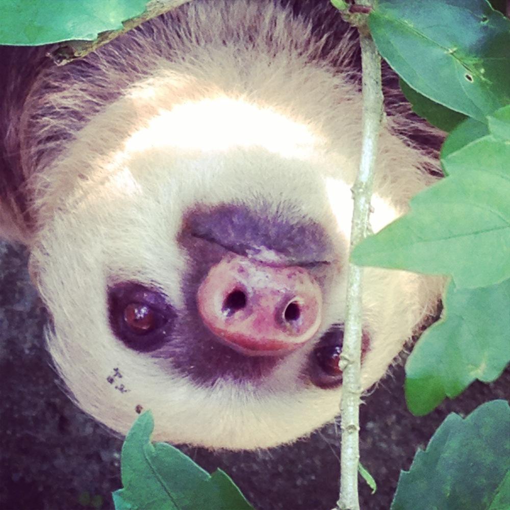 Little slothface