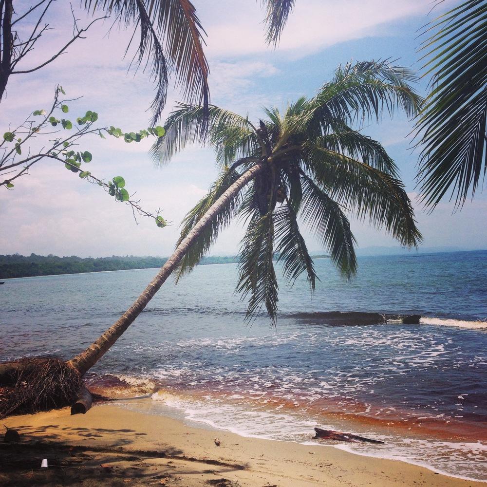 Beautiful beautiful Manzanilla beach