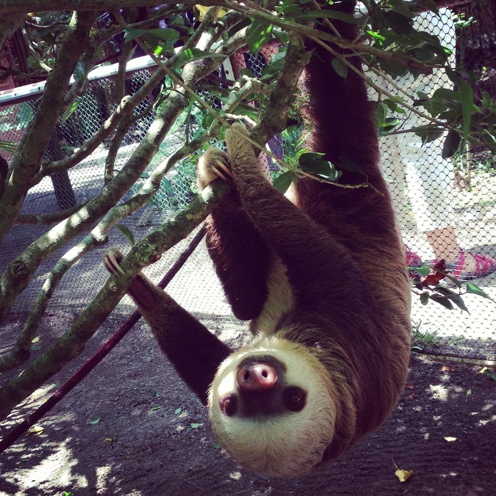 Hello slothface