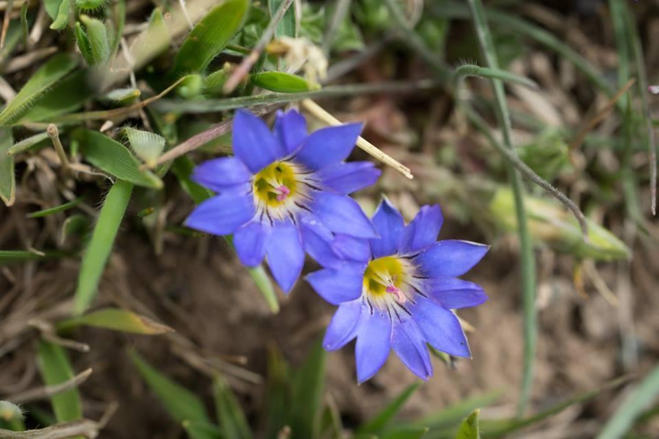 spring flower_9.jpg