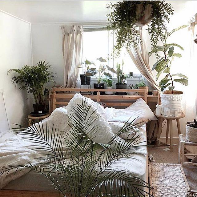 /// go green 🌱 via @dear_plants. . . . #plants #homedecor #bedroomdecor #bedroom #bedroominspo #homeinspo #interiors #gogreen #plantsofinstagram