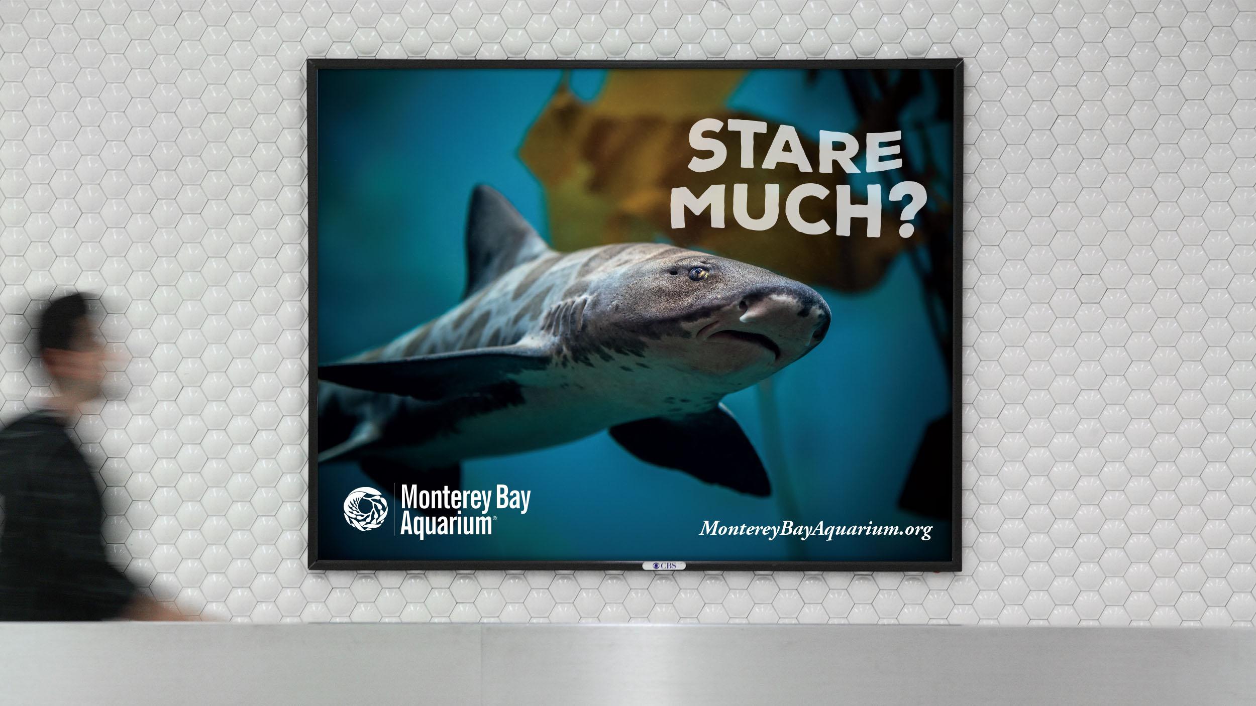 monterey bay aquarium brian ho art direction design