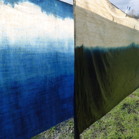 Natural Indigo dip dye oxidising in sunlight