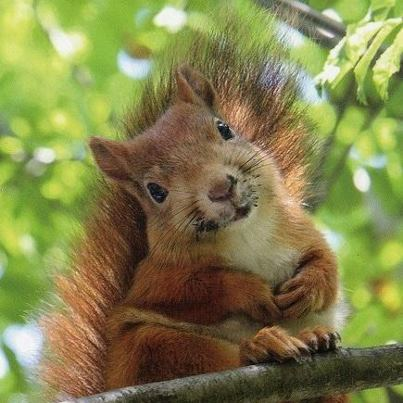 One of our friendly red squirrels