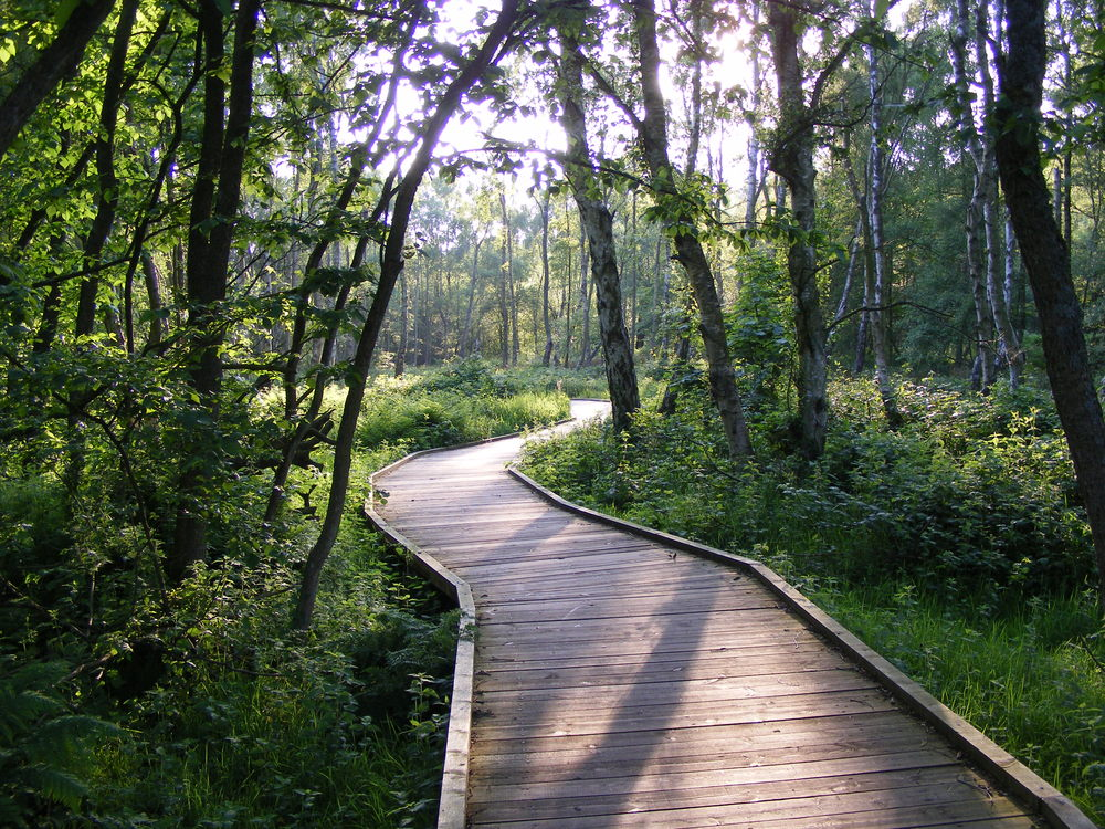 Boardwalk around lake in Ainsdale Nature Reserve