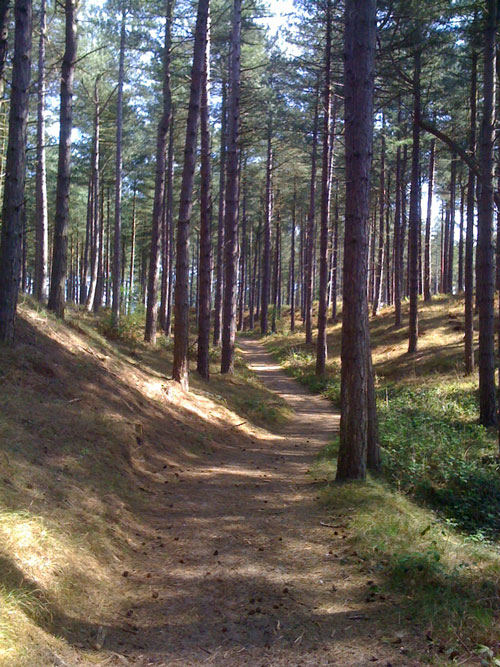 Woodland path through Ainsdale Nature Reserve