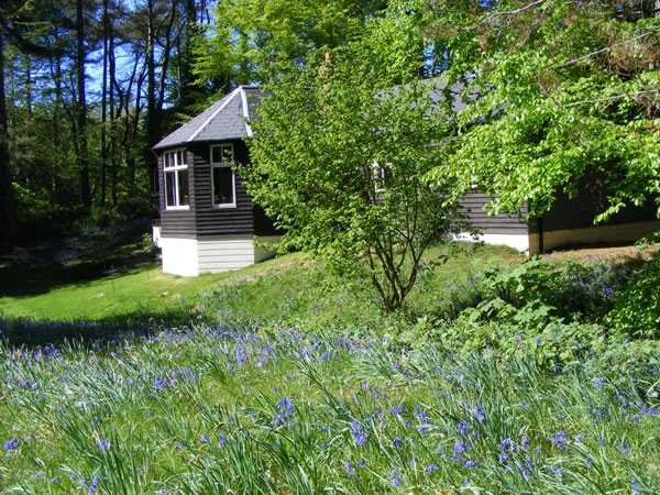 Windy Gap with bluebells