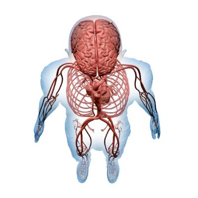 Límbic Salud: La teoría polivagal y Límbic Salud