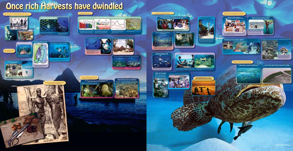 9-FISH-G3.jpg