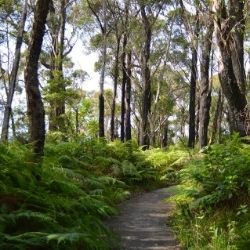 Forest walk to Sublime Point                    Illawarra Escarpment