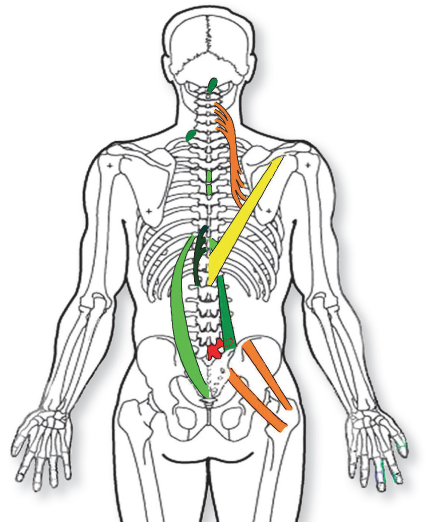 Spinal Reflex Therapy Soft Tissue Chart
