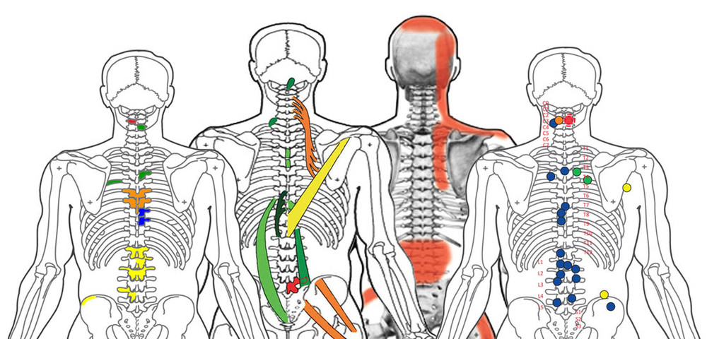 Difference Between Spinal Reflex Analysis and Spinal Reflex Therapy