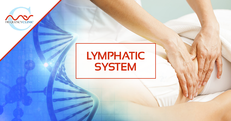 mas-sajady-program-reviews-frequency-lymphatic-system.png