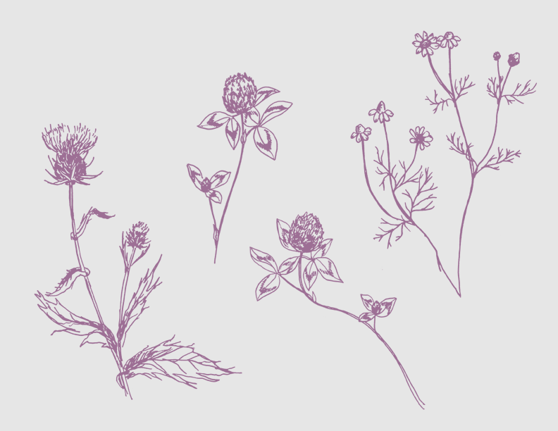fleur fleurs illustrations by erin ellis