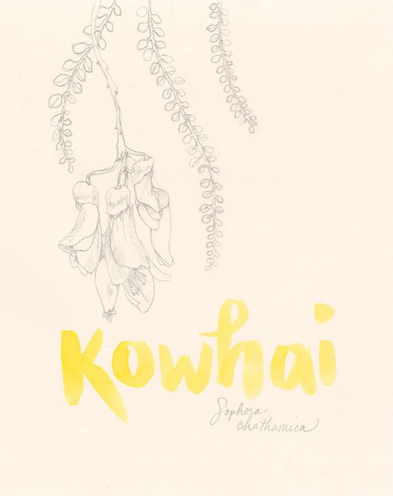 Kowhai_web.jpg