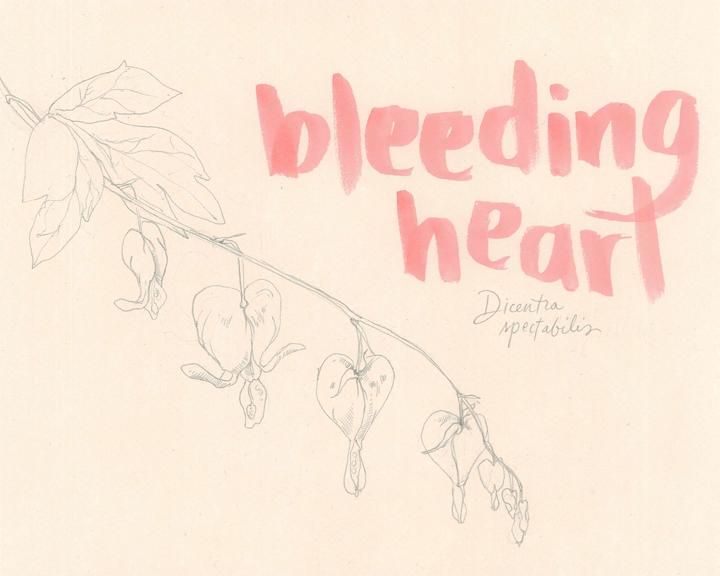 bleeding_heart_web.jpg