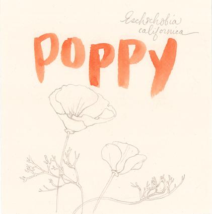 poppy1_web.jpg