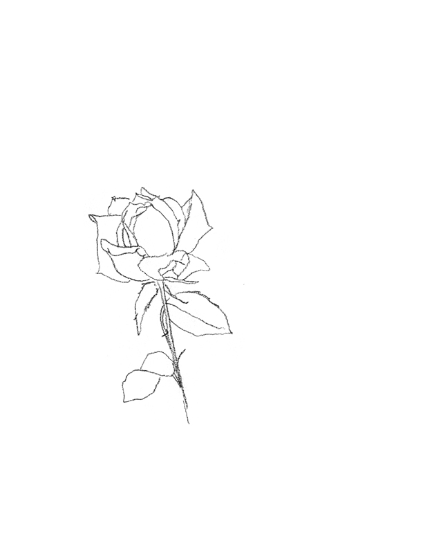 day16_rose.jpg