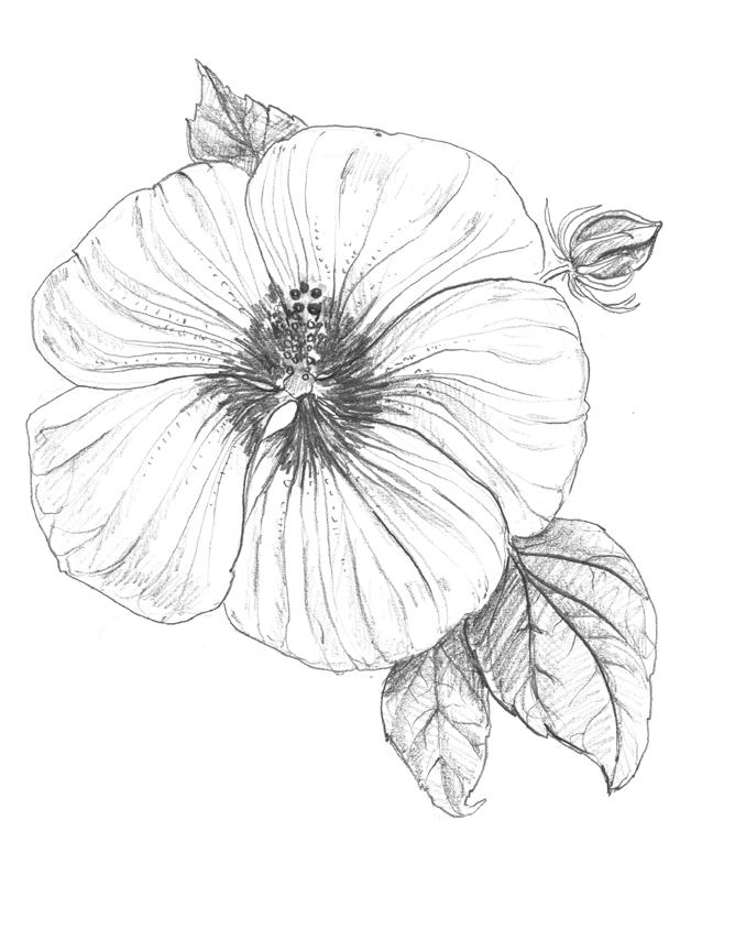 giant_hibiscus.jpg