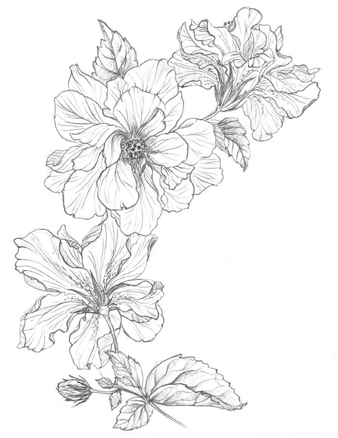 hibiscus_trail.jpg
