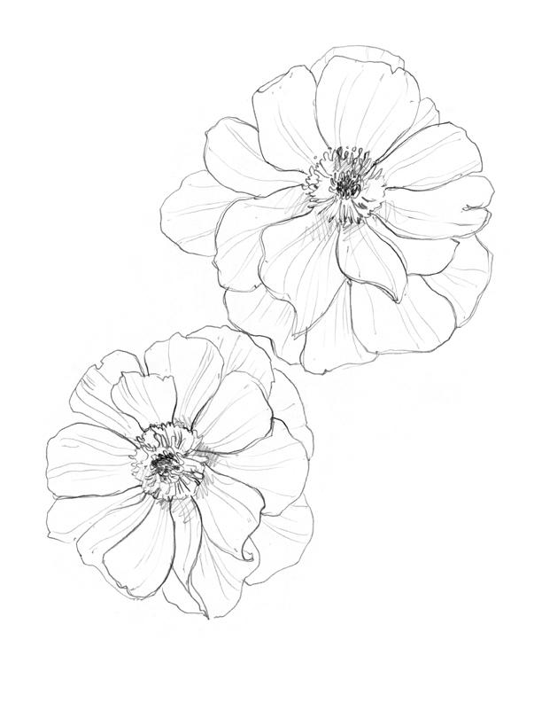 anemone_web.jpg