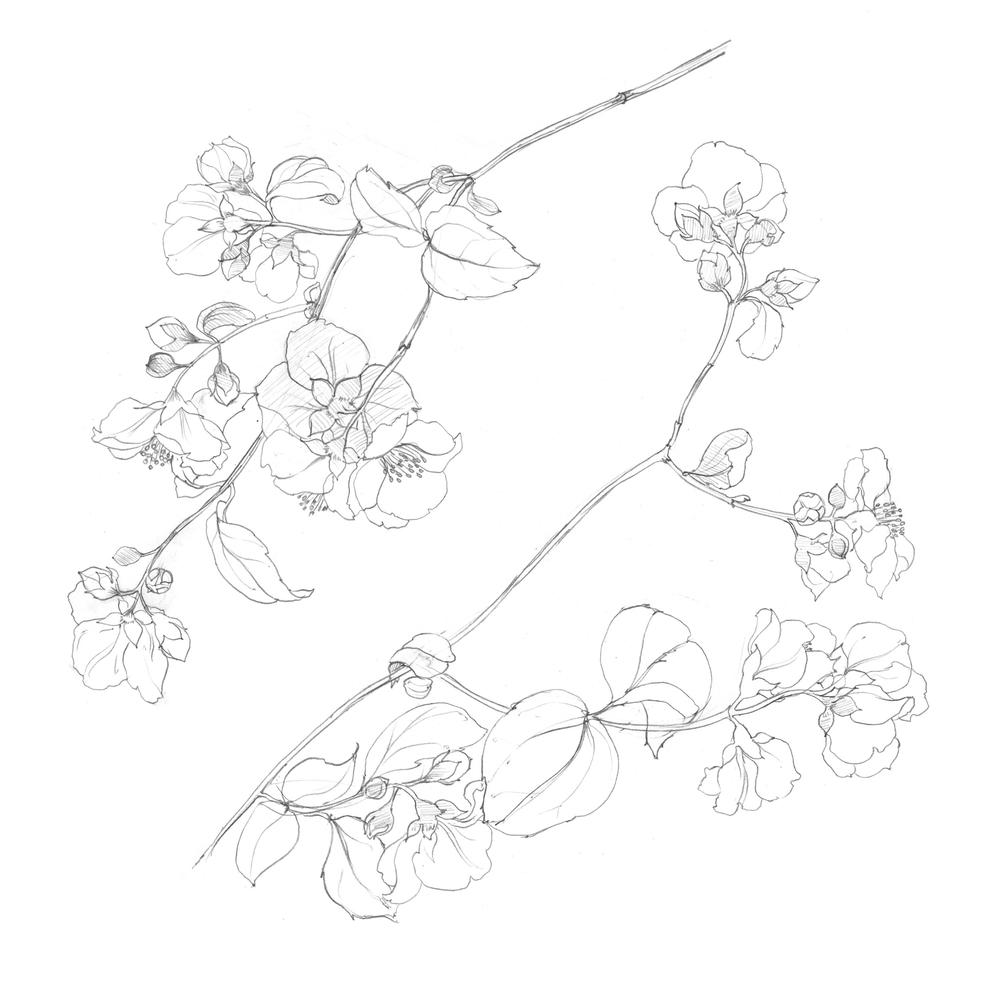treeflowersx2.jpg