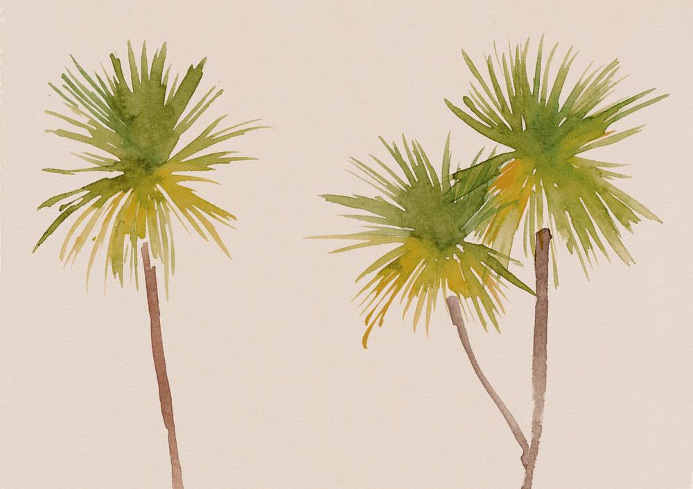 erin-ellis-watercolor-nature-illustration-cabbage-tree.jpg