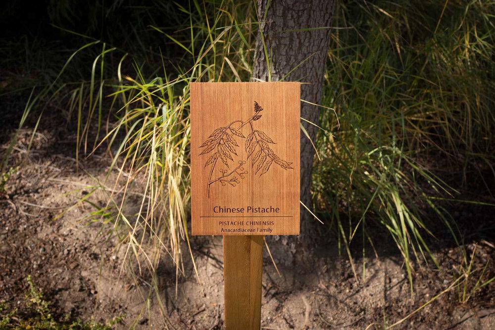 botanical-illustration-identification-signage--Chinese-Pistache-chinesis-Facebook-HQ-by-Erin-Ellis.jpg