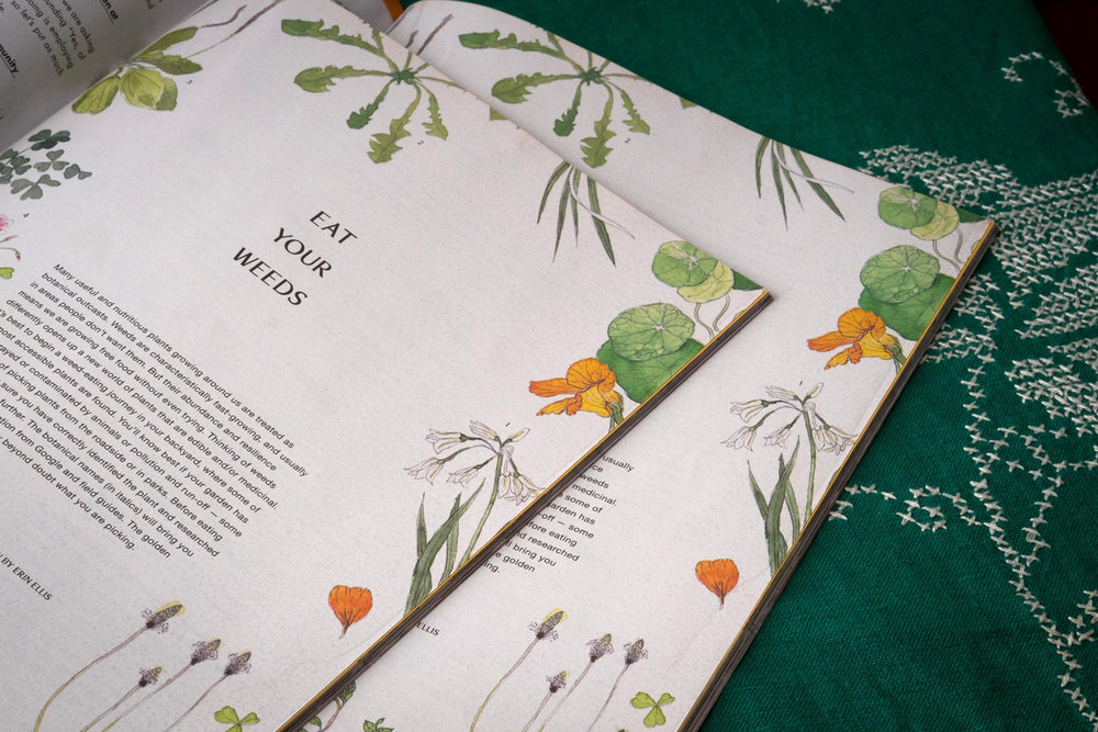 Illustrated Botanical Editorial illustration edible weeds for Stone Soup Syndicate