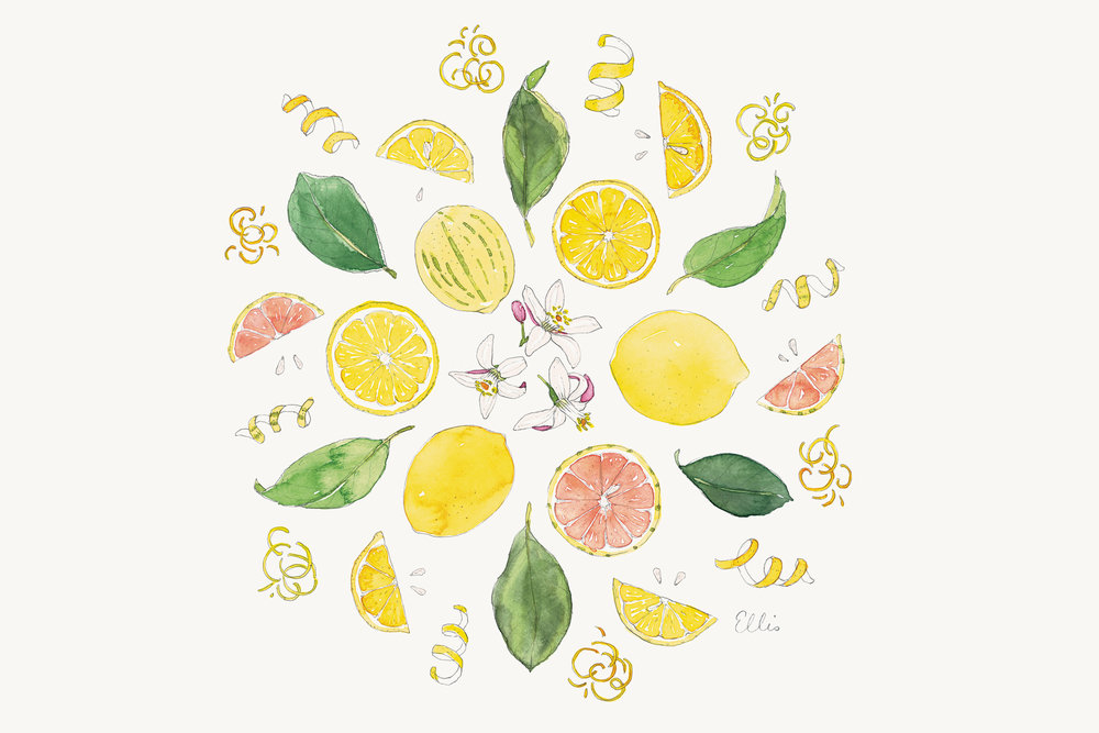Lemons-mandala-illustration-by-Erin-Ellis---Tampa-Bay-Times-Taste.jpg