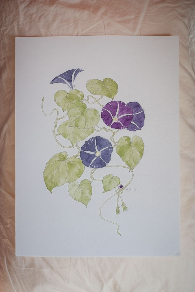 Erin Ellis_botanical flowering vines watercolor drawings-15-2.jpg