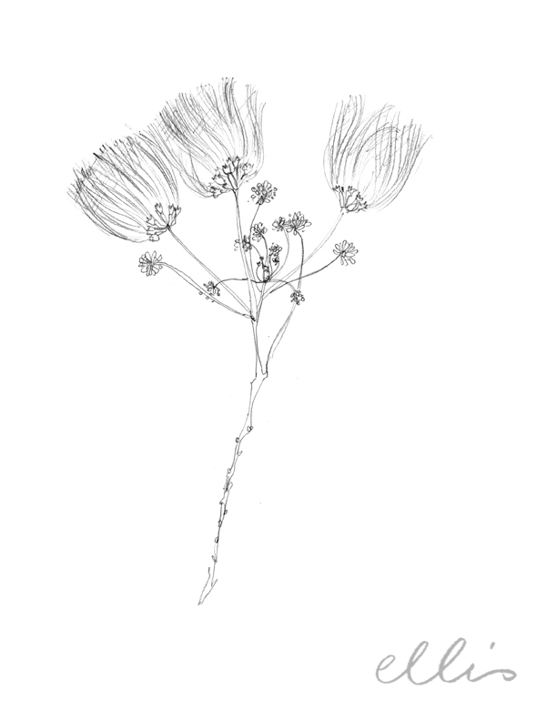 Erin Ellis_100 days project botanical drawings_2013-52.jpg