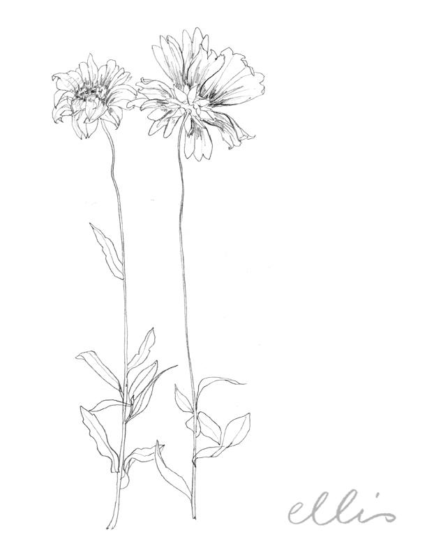 Erin Ellis_100 days project botanical drawings_2013-62.jpg