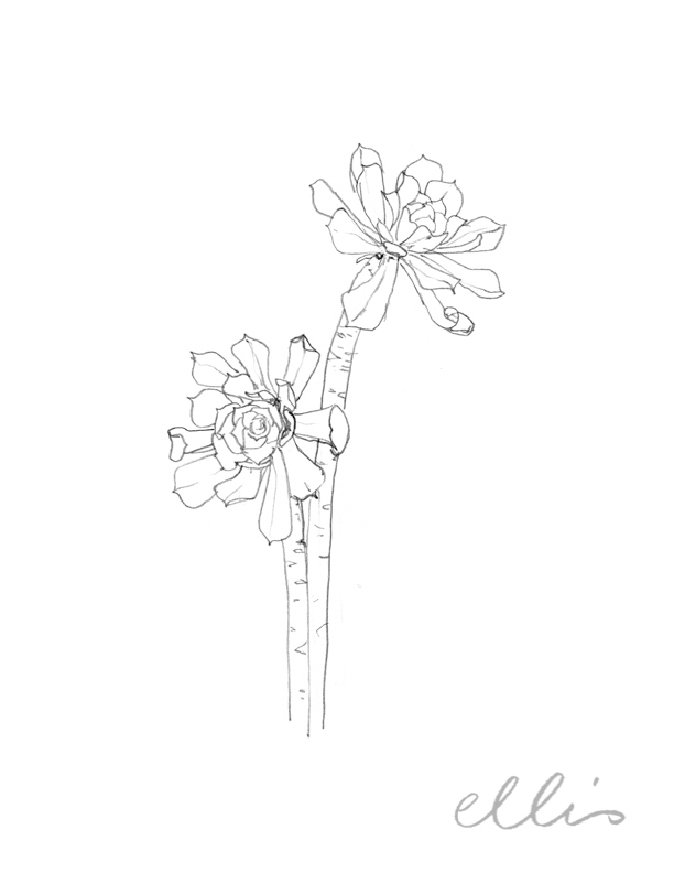 Erin Ellis_100 days project botanical drawings_2013-98.jpg