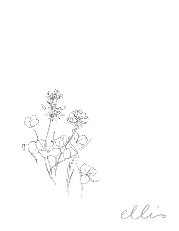 Erin Ellis_100 days project botanical drawings_2013-10.jpg