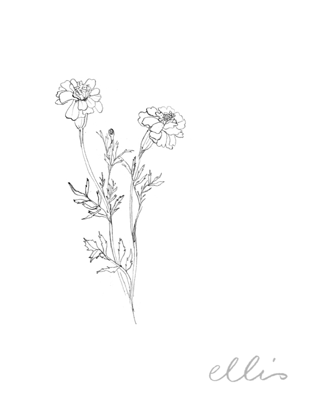 Erin Ellis_100 days project botanical drawings_2013-17.jpg