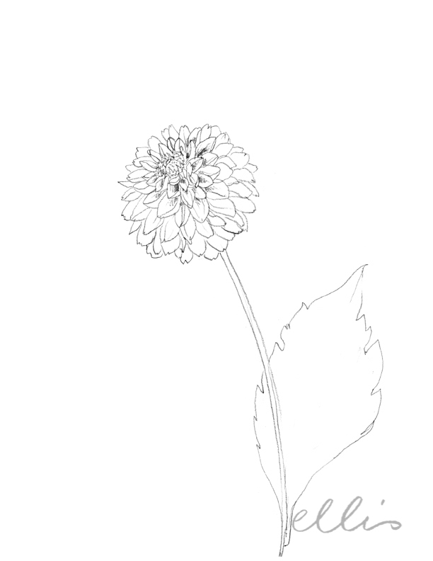 Erin Ellis_100 days project botanical drawings_2013-26.jpg
