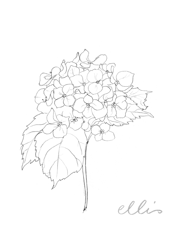 Erin Ellis_100 days project botanical drawings_2013-33.jpg