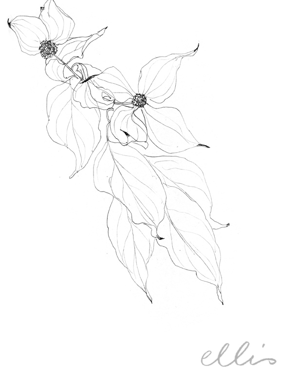 Erin Ellis_100 days project botanical drawings_2013-48.jpg