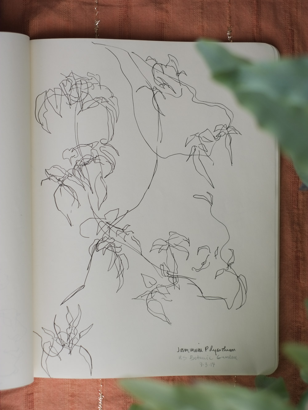 Erin_Ellis_daily_botanical_blind_drawings_sept_2017.jpg-3.jpg